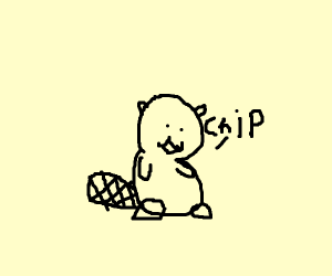 beaver named chip