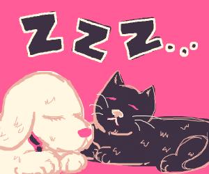 Puppy Sleeps With A Kitten