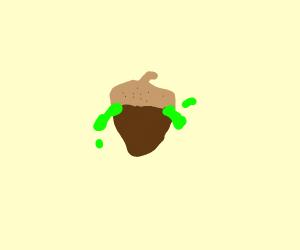 goo acorn