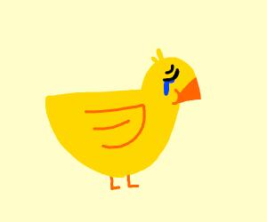 Duck cries