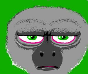 Monkey is not amused