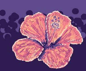 A very pretty flower!