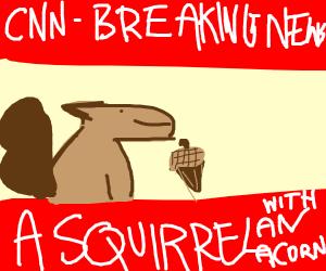 Squirrel with an acorn on CNN