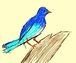 blue bird with orange beak and legs