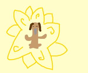 Zen Doggo