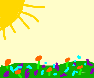 Sun shines upon a field of flowers