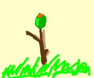 olive on a stick
