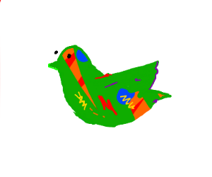 Really colorful bird