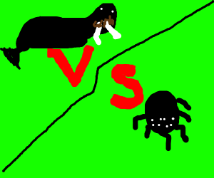 Walrus vs Spider