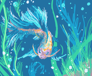 blue/Orange fish with purple face
