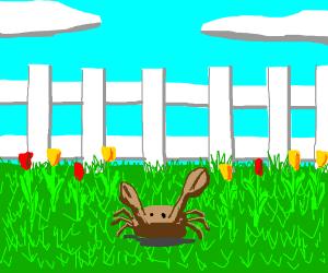 Brown crab in a flower garden