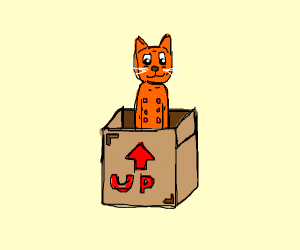 an orange cat in a box