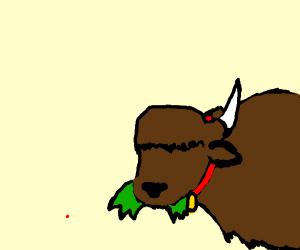 Pet Buffalo