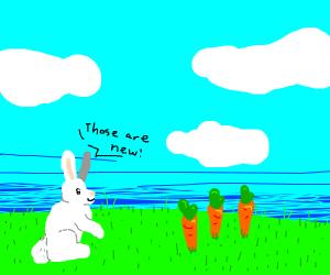 Rabbit sees new Carrots