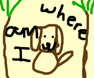 Dog is lost in the woods