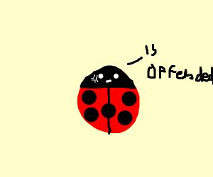 Offended ladybug/worm creature