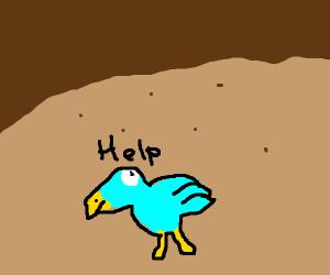 A bird trapped underground