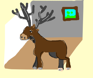 Moose in a room