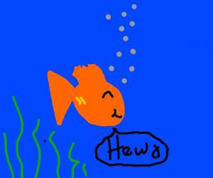 A cute goldfish saying hewo