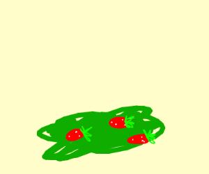 very flat strawberry bush
