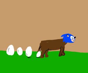 Sonic the eggdog