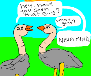 Lost ostrich