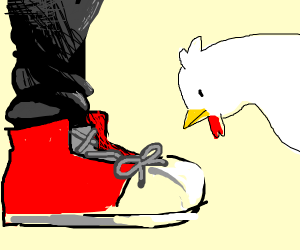 Chicken looking at shoelaces
