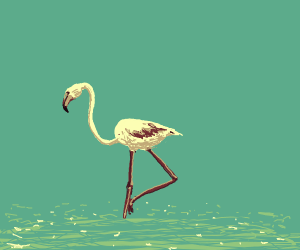 Flamingo (bird, NOT song)