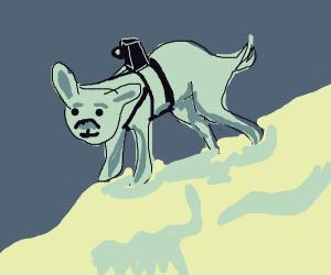 Dog mount