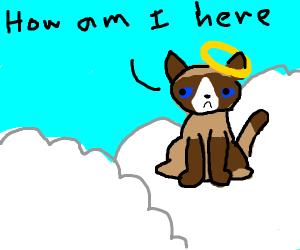 Grumpy cat somehow got into heaven