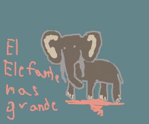 El Elefante es grande