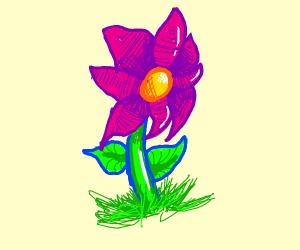 Cute Flower