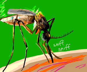 mosquito sniffing