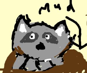 Raccoon in a Mudslide