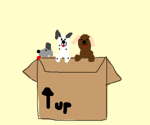 dogs in boxes
