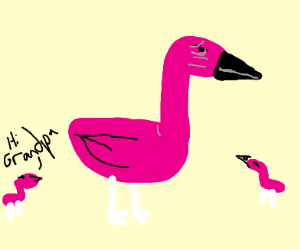 Old Flamingo