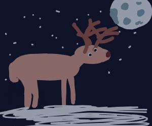 Elk looks at the moon in winter