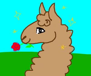 Handsome Llama