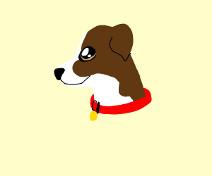 Jack russel (dog breed)