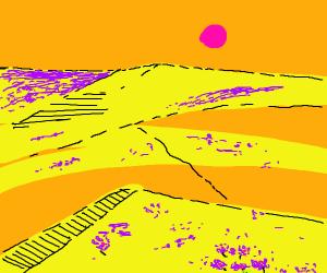 Purple flowers in a desert.