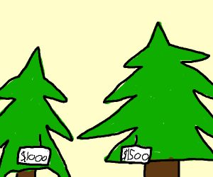 expensive trees