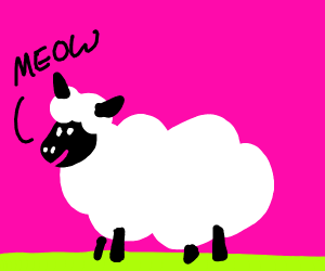 sheep meows