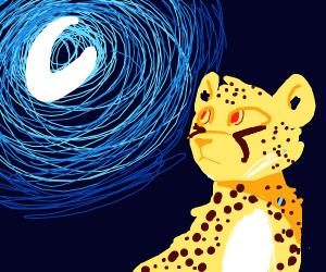 Cheetah looking at moon like a wolf