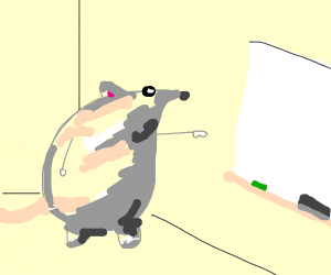 Mouse pointing at white chalkboard