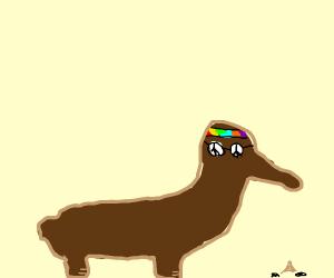 Hippie Anteater