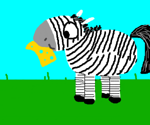 Zebra eating cheese