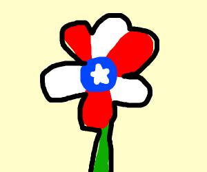 American flag flower