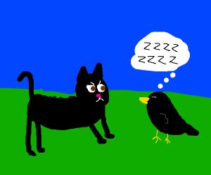 black cat sees a sleeping blackbird