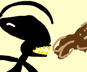 Xenomorph vs Bear