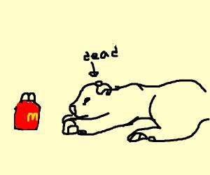 Lion dies for hamburger